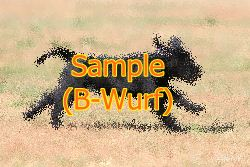 sample-b-wurf